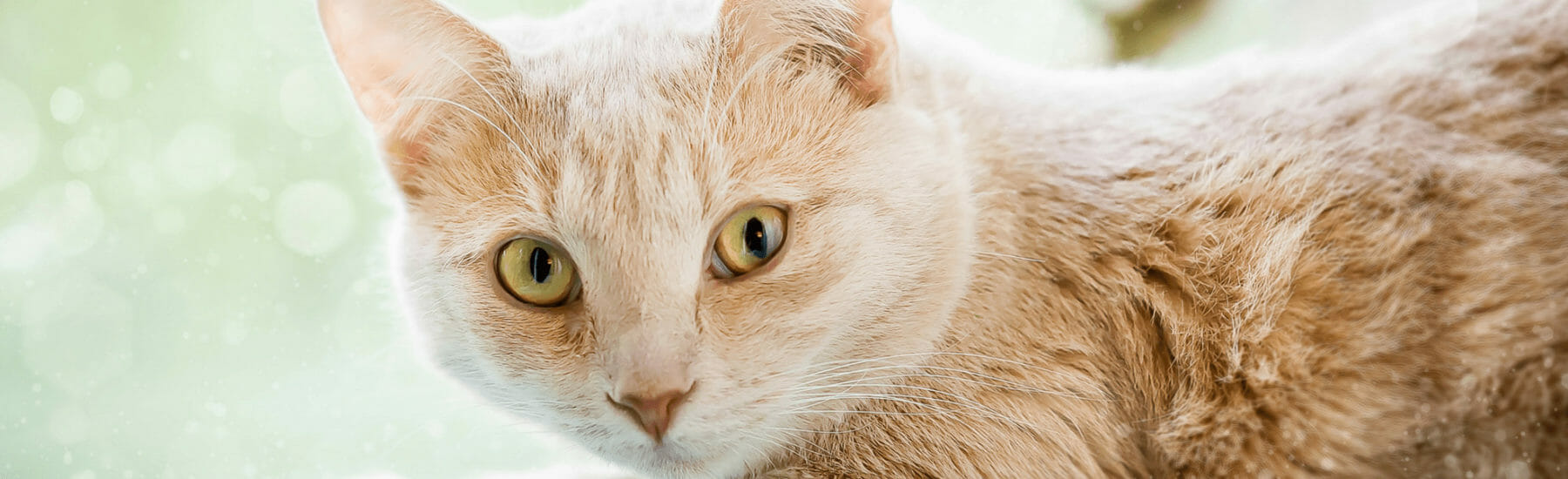 Deworming Treatment for Pets