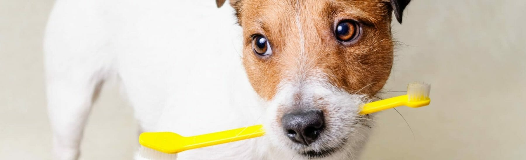 Dental Care Services for Pets