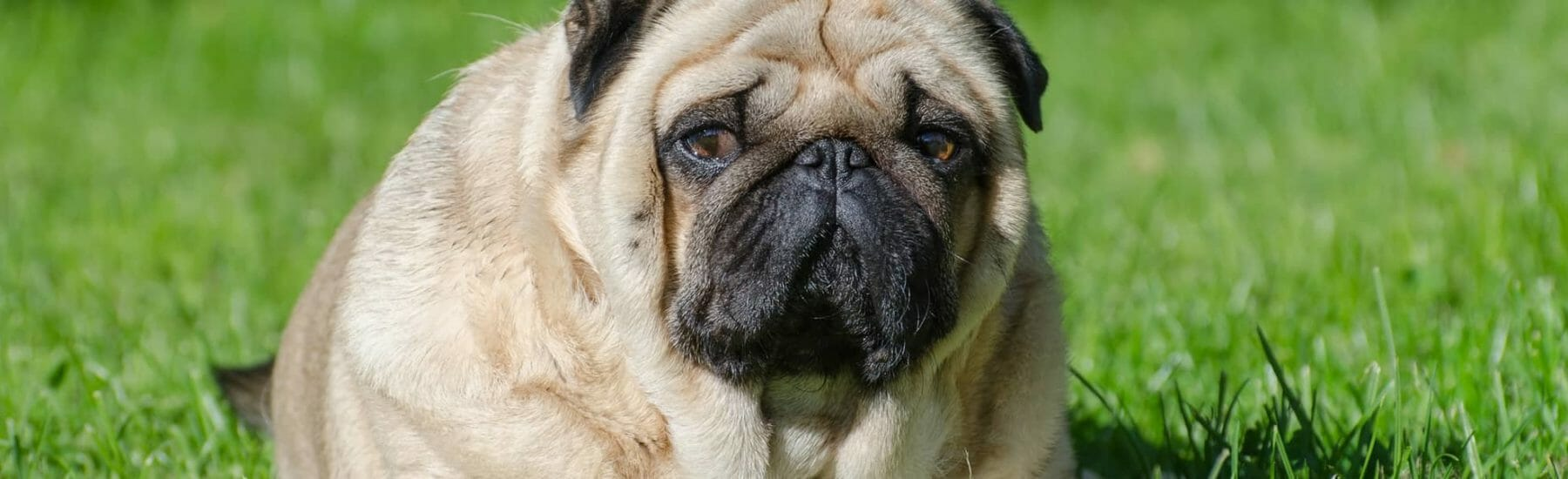 Weight Management Services for Pets