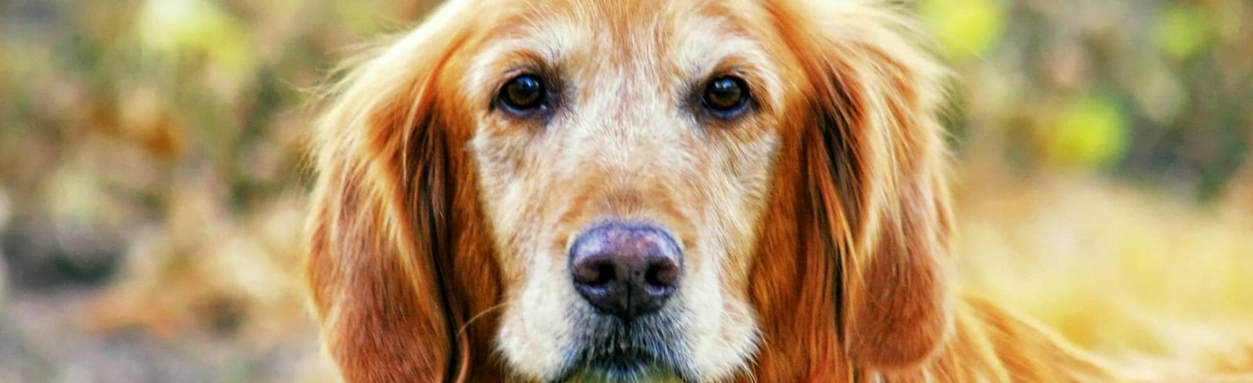 Senior Care Services for Pets
