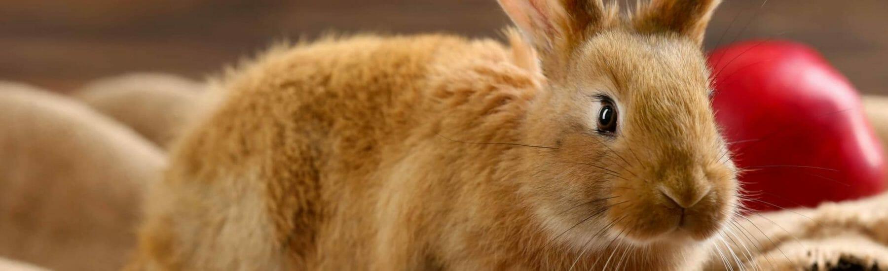 Rabbit Services