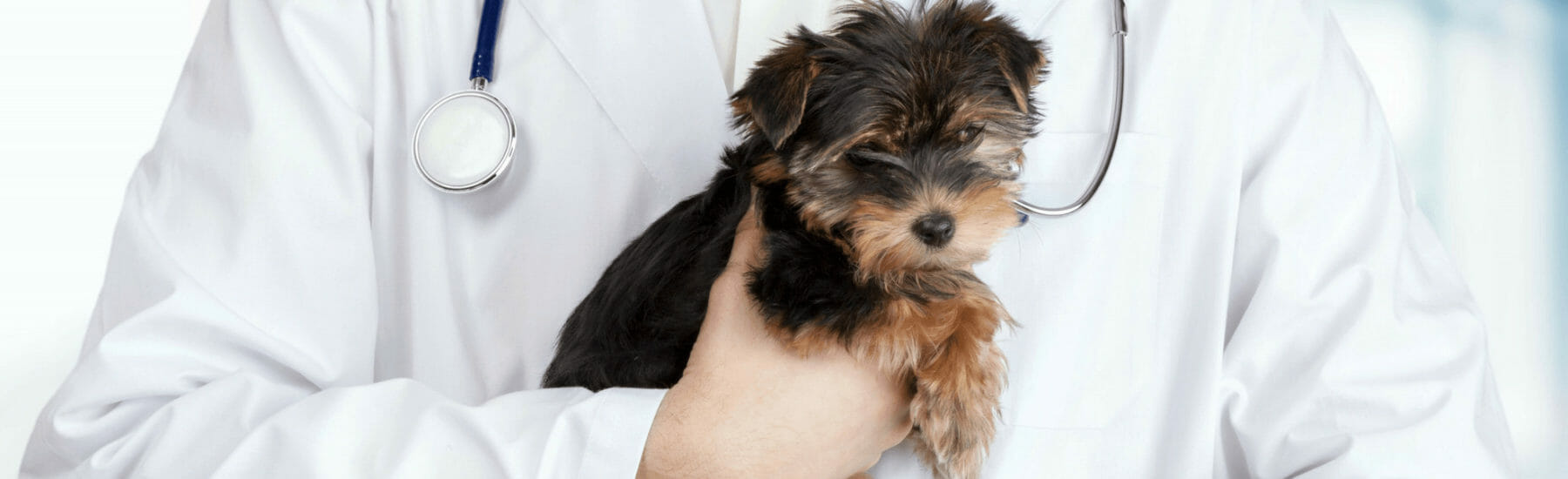 Spay and Neutering Services for Pets